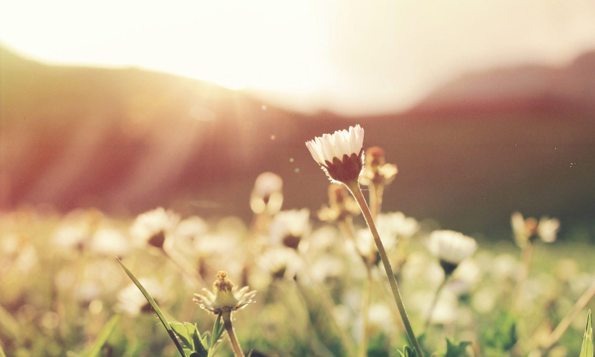 Psychotherapie | Sexualtherapie | Paartherapie